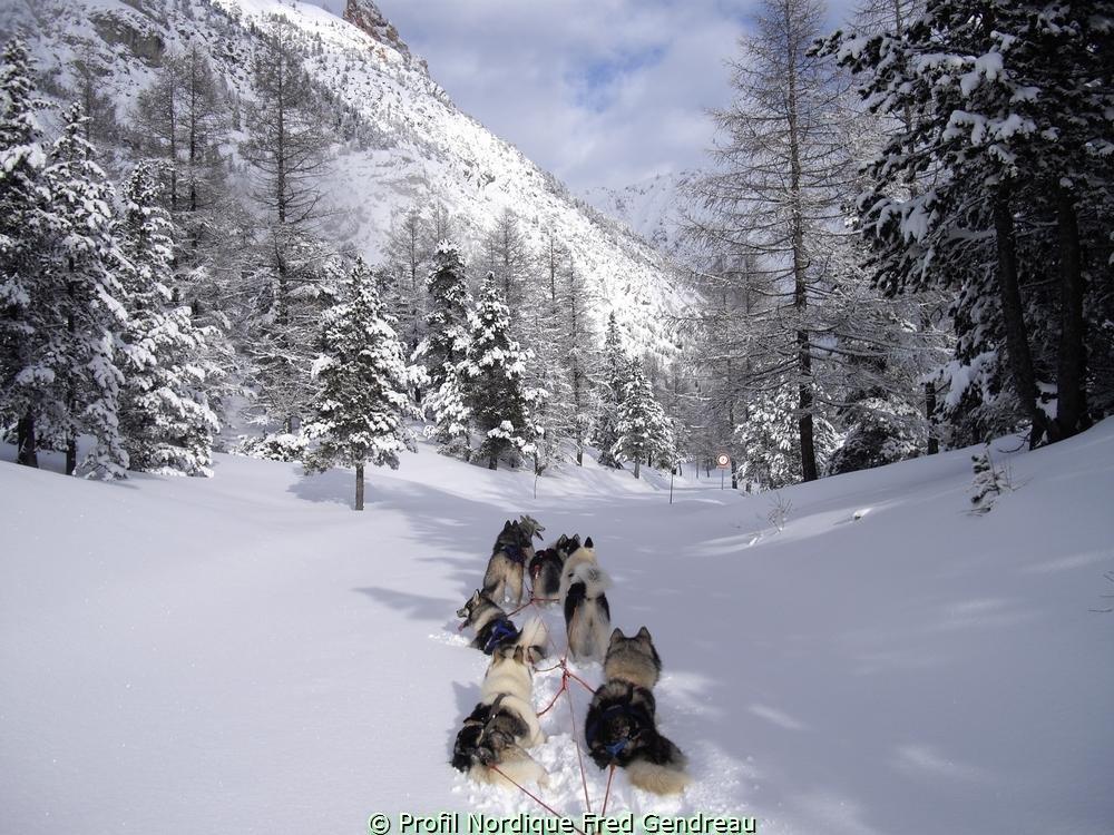 Séjour découverte des chiens de traineau à Serre Chevalier
