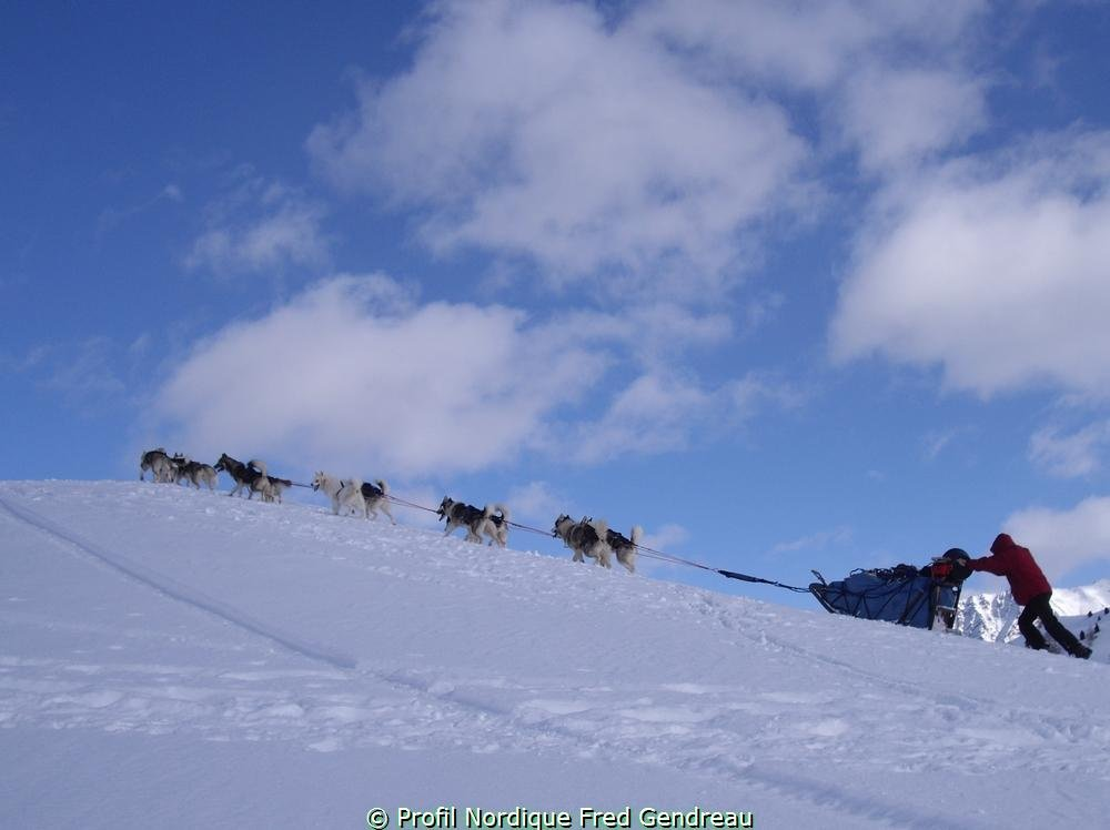 Séjour découverte et initiation aux chiens de traineau à Serre Chevalier