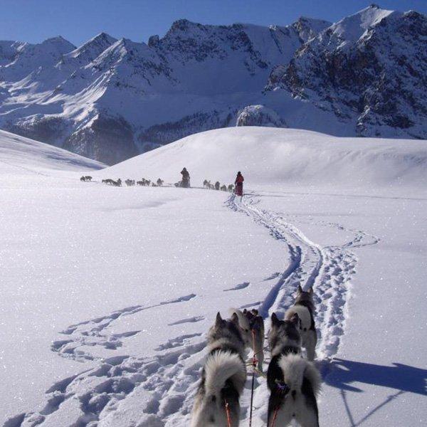 Chiens de traineau pour votre séjour au ski tout compris à Serre Chevalier